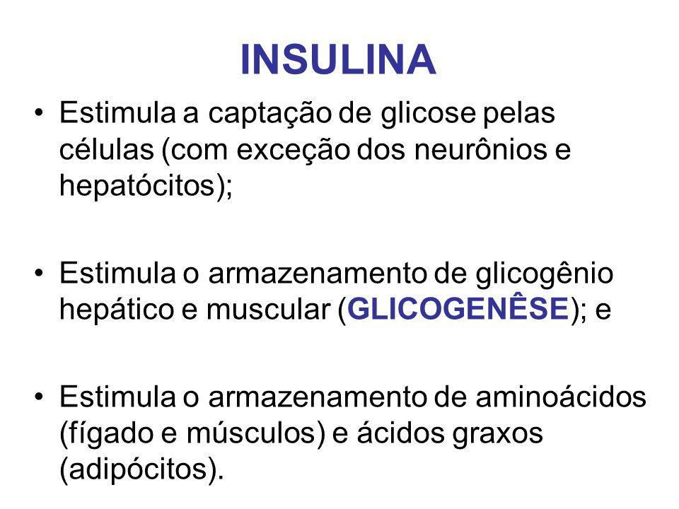 INSULINA Estimula a captação de glicose pelas células (com exceção dos neurônios e hepatócitos);