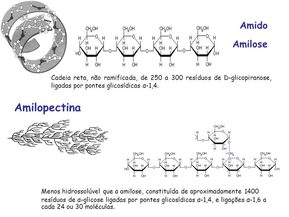 Amilopectina Amido Amilose