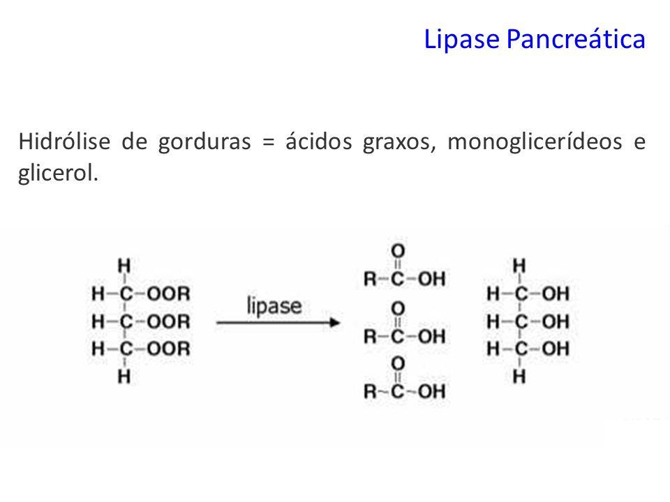 Lipase Pancreática Hidrólise de gorduras = ácidos graxos, monoglicerídeos e glicerol.