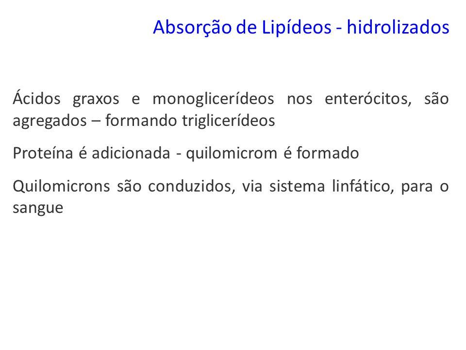 Absorção de Lipídeos - hidrolizados