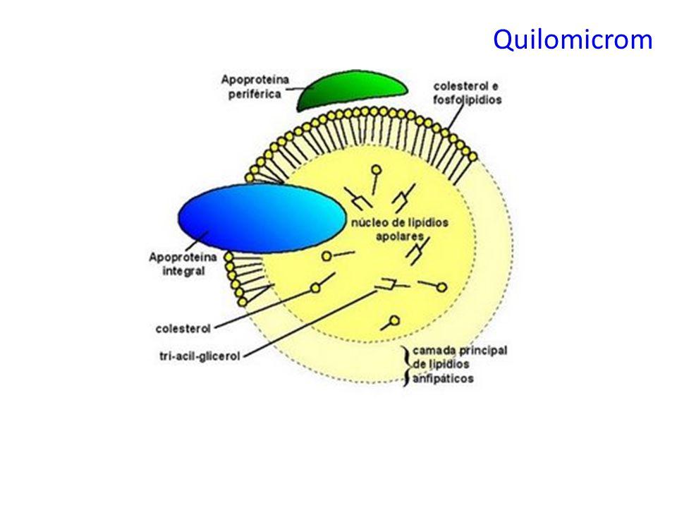 Quilomicrom