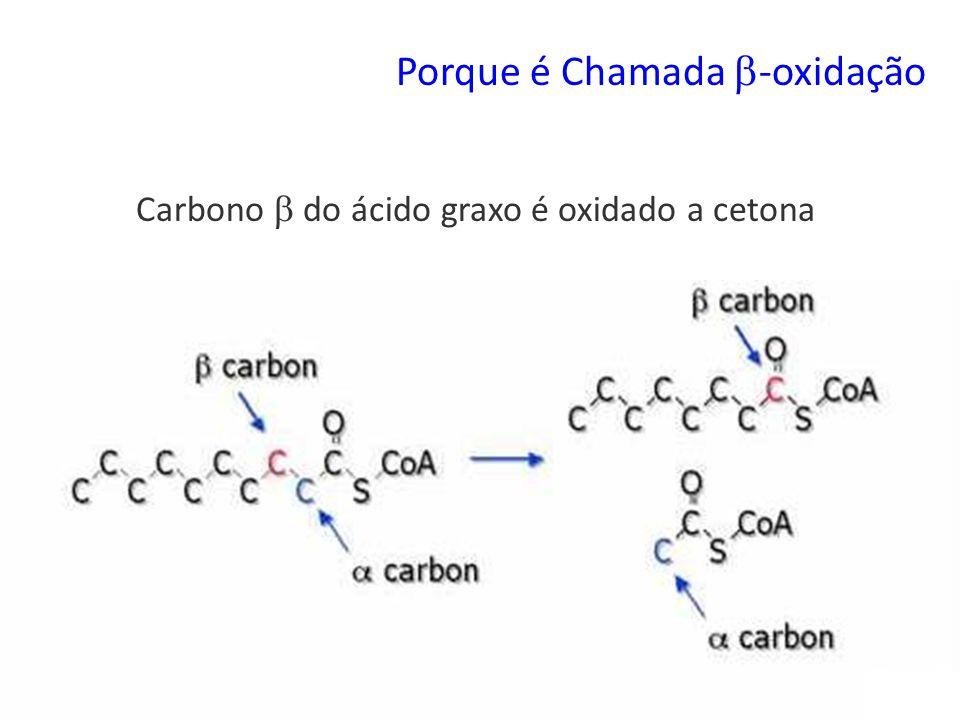Carbono  do ácido graxo é oxidado a cetona