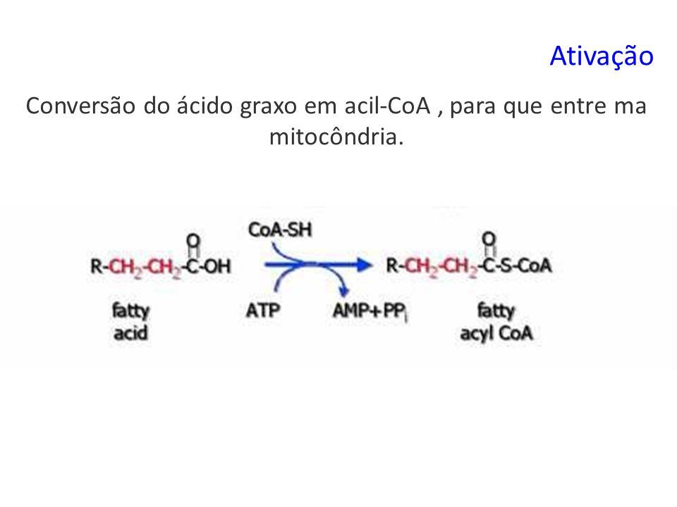 Conversão do ácido graxo em acil-CoA , para que entre ma mitocôndria.