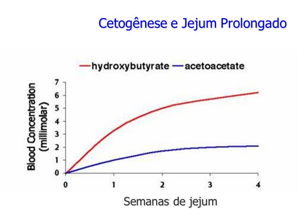 Cetogênese e Jejum Prolongado