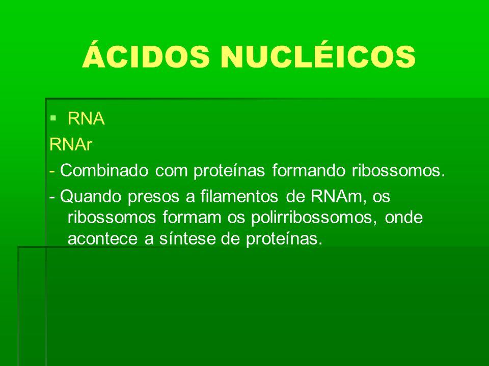 ÁCIDOS NUCLÉICOS RNA RNAr