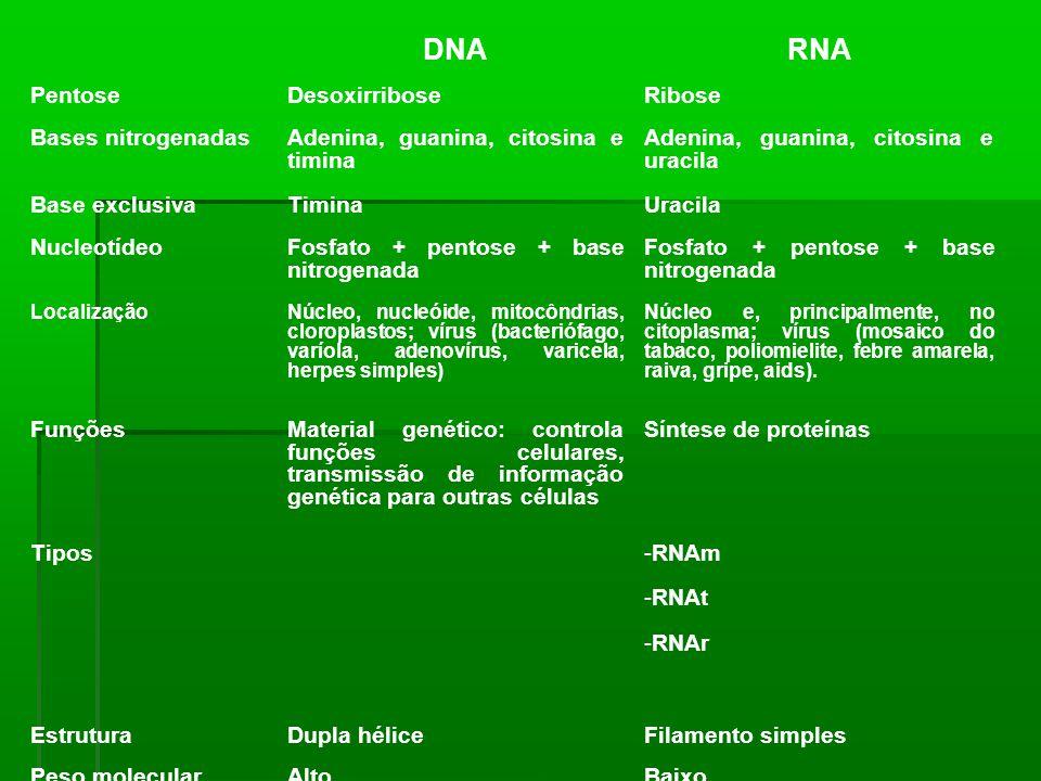 DNA RNA Pentose Desoxirribose Ribose Bases nitrogenadas