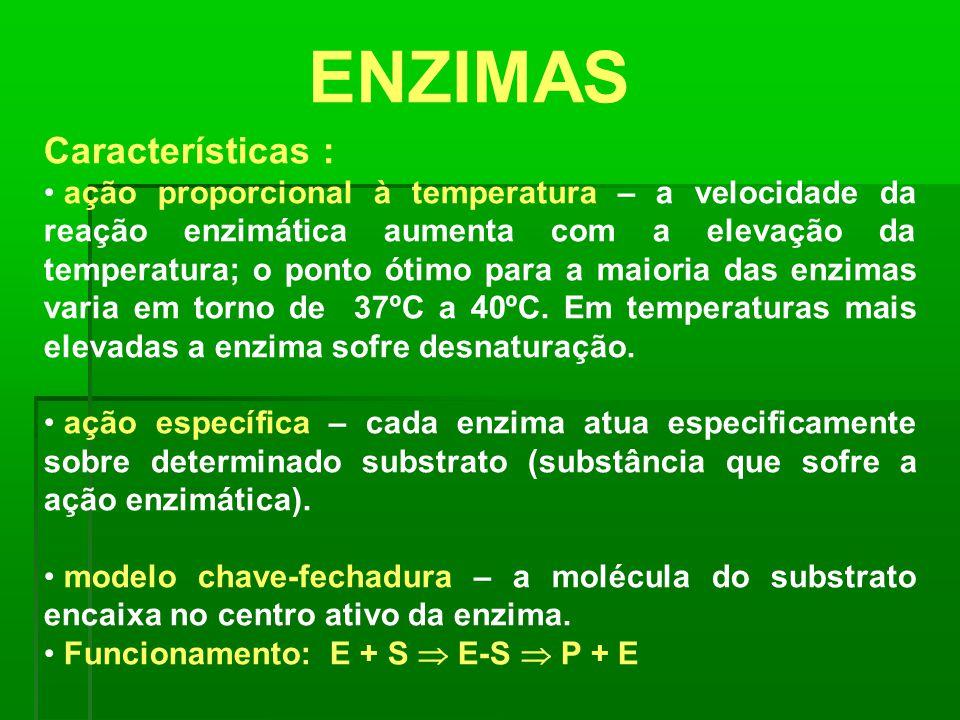 ENZIMAS Características :