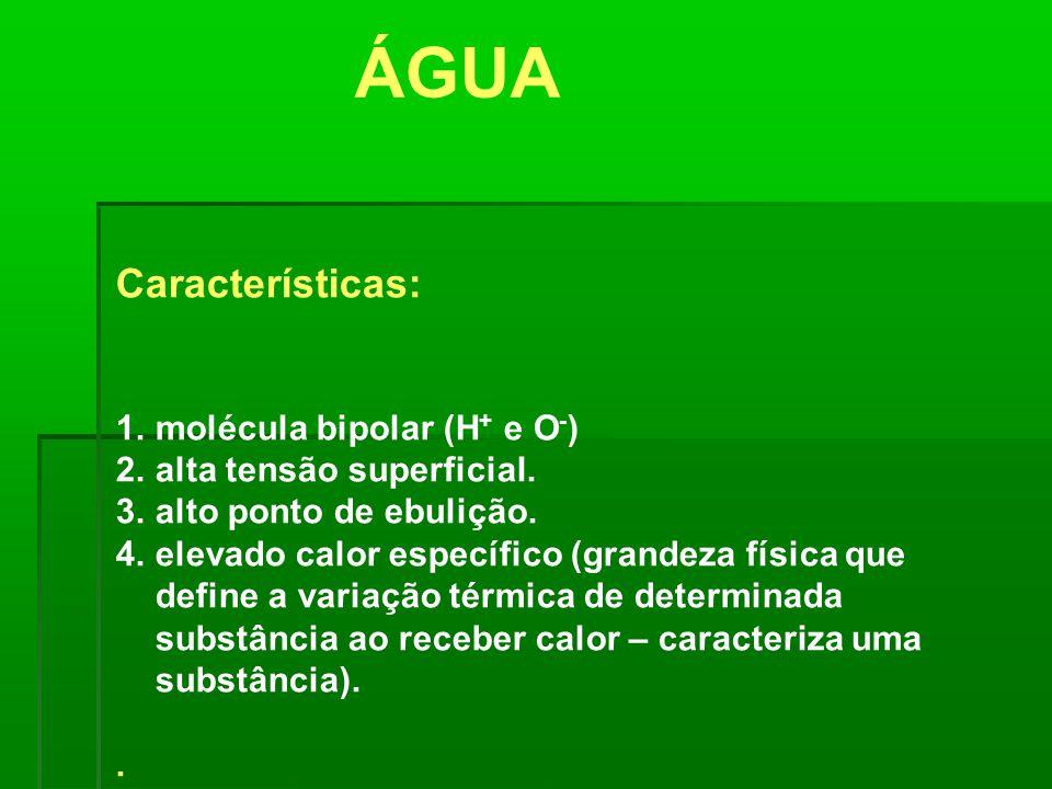 ÁGUA Características: molécula bipolar (H+ e O-)