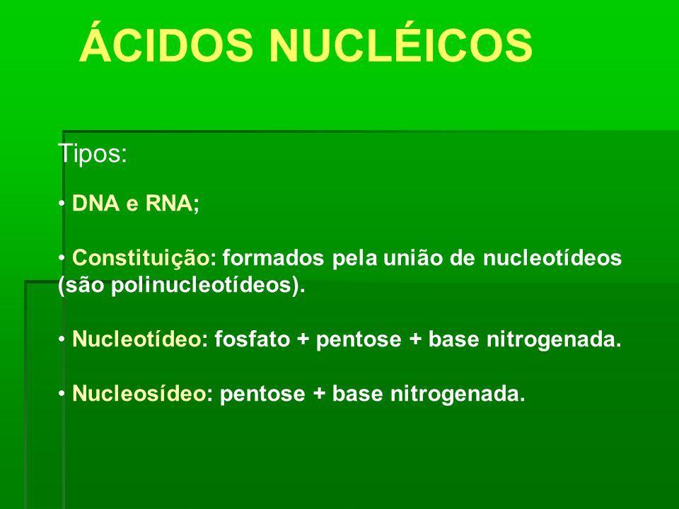 ÁCIDOS NUCLÉICOS Tipos: DNA e RNA;