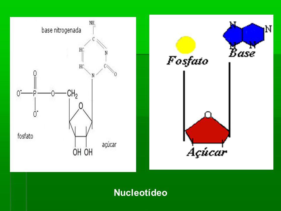 Nucleotídeo