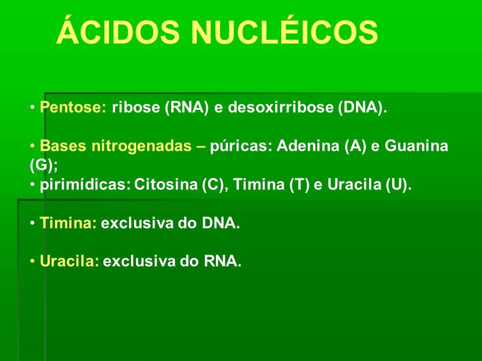 ÁCIDOS NUCLÉICOS Pentose: ribose (RNA) e desoxirribose (DNA).