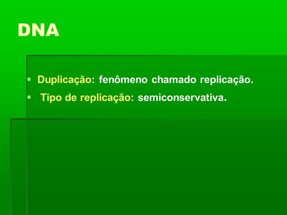 DNA Duplicação: fenômeno chamado replicação.