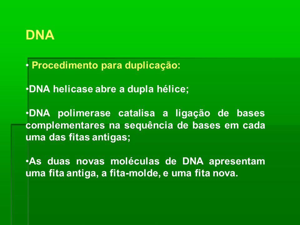 DNA Procedimento para duplicação: DNA helicase abre a dupla hélice;