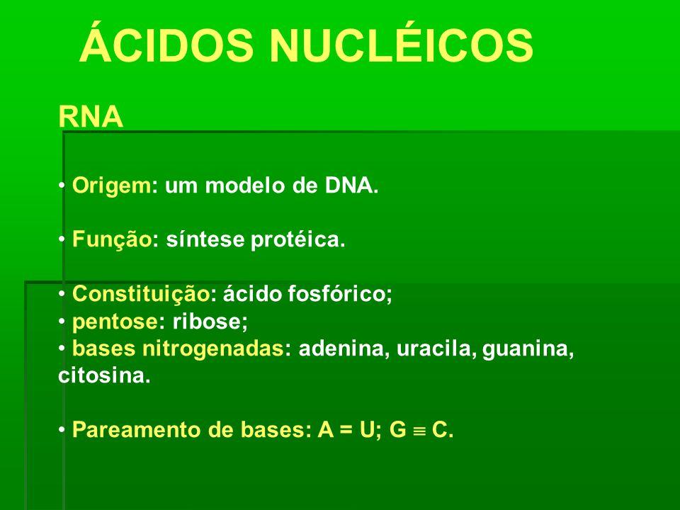ÁCIDOS NUCLÉICOS RNA Origem: um modelo de DNA.