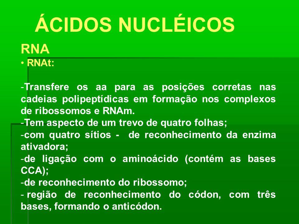 ÁCIDOS NUCLÉICOS RNA RNAt: