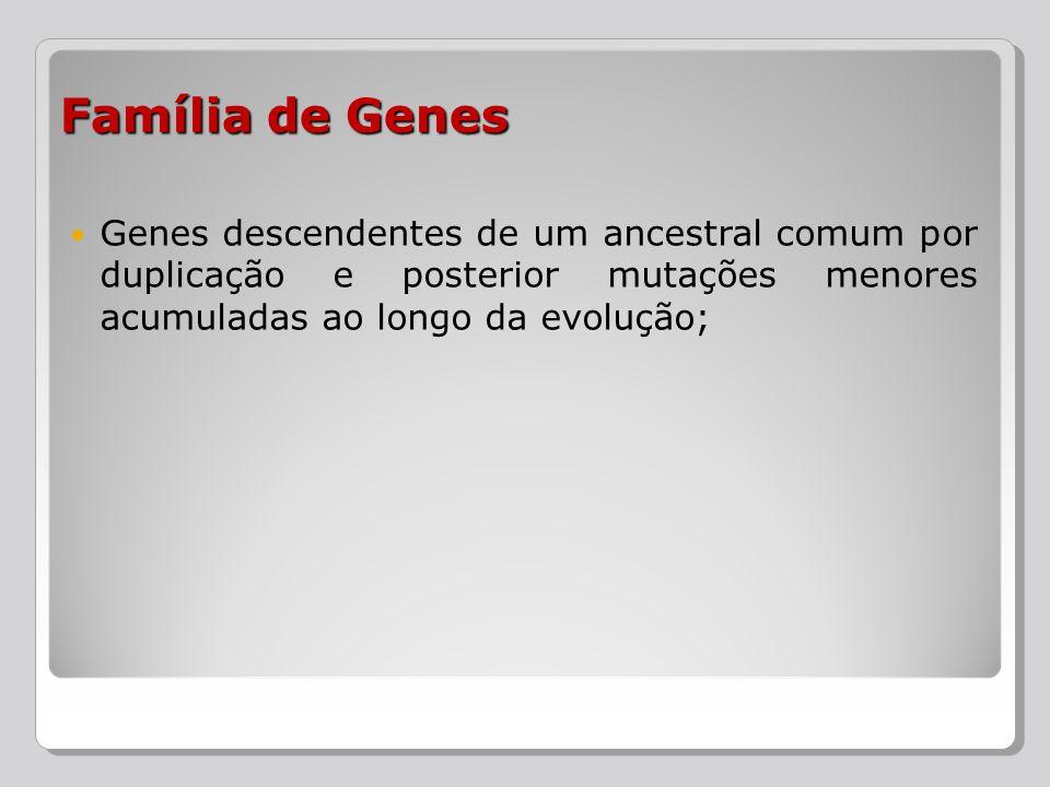 Família de Genes Genes descendentes de um ancestral comum por duplicação e posterior mutações menores acumuladas ao longo da evolução;