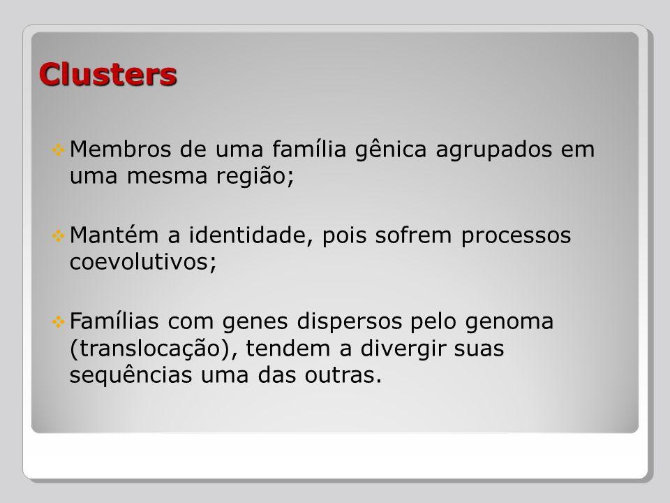 Clusters Membros de uma família gênica agrupados em uma mesma região;