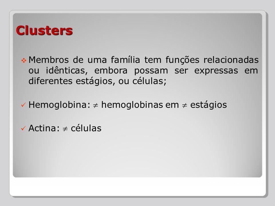 Clusters Membros de uma família tem funções relacionadas ou idênticas, embora possam ser expressas em diferentes estágios, ou células;