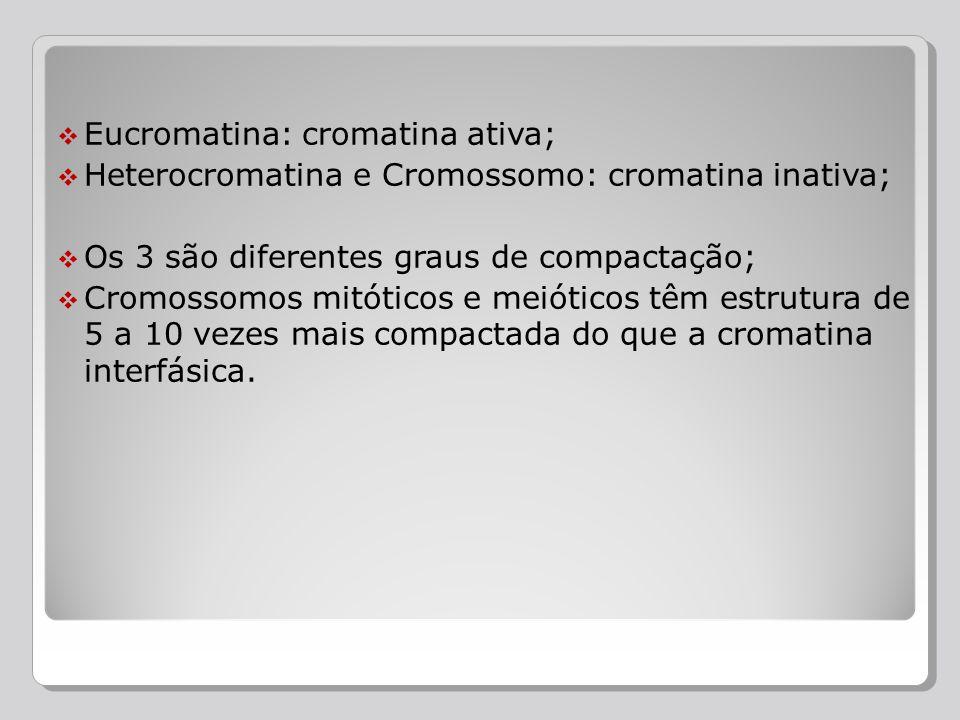 Eucromatina: cromatina ativa;