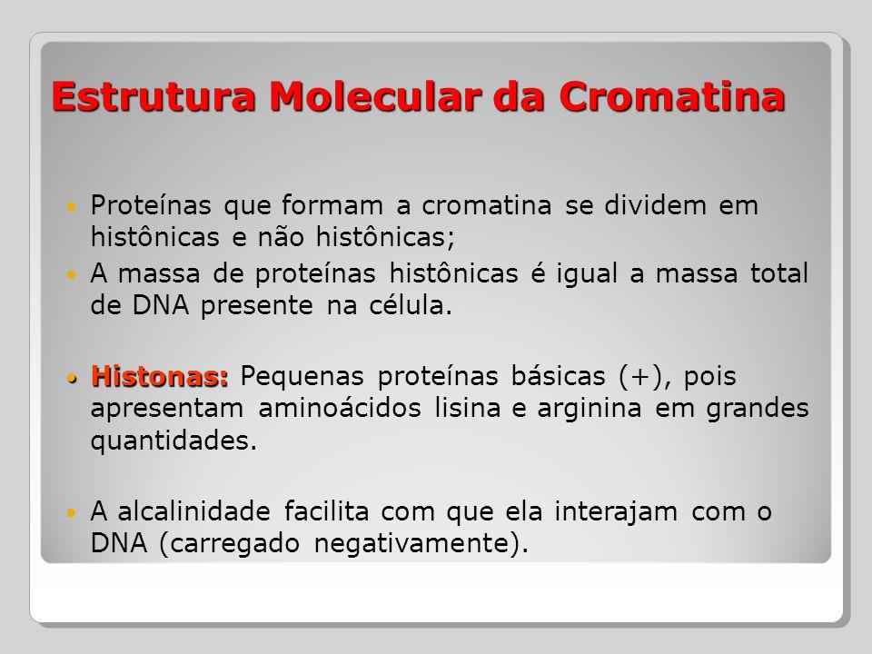 Estrutura Molecular da Cromatina
