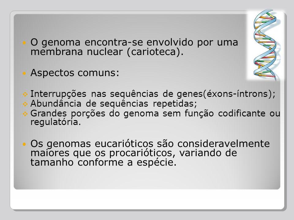 O genoma encontra-se envolvido por uma membrana nuclear (carioteca).