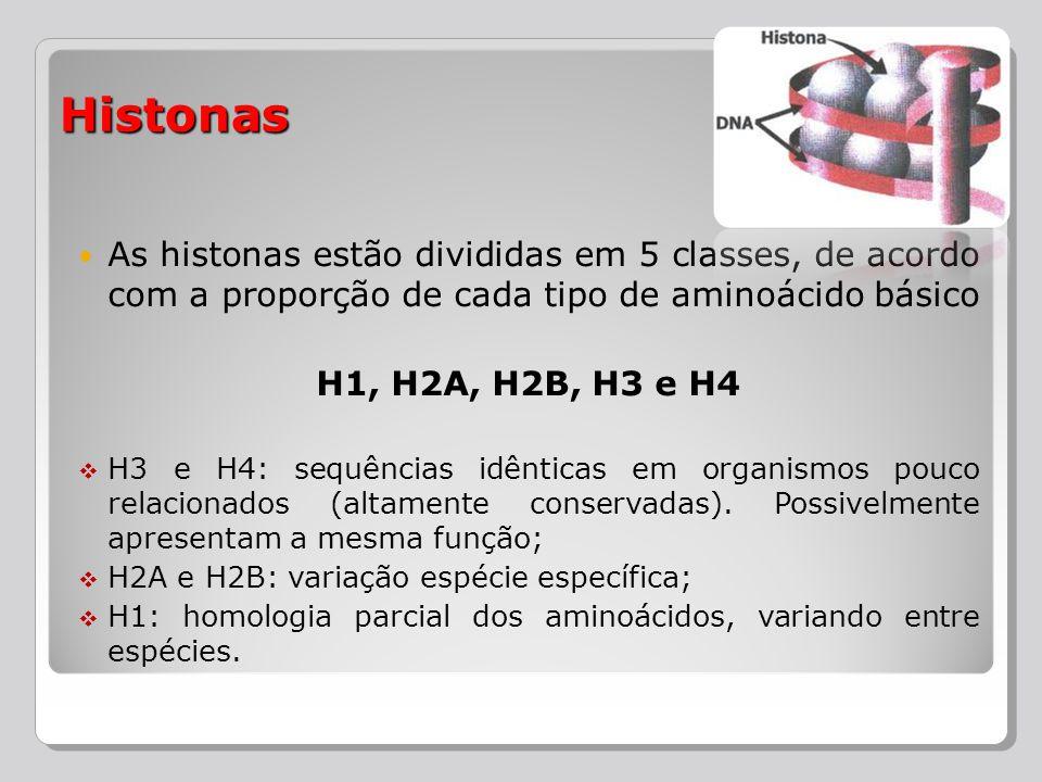 Histonas As histonas estão divididas em 5 classes, de acordo com a proporção de cada tipo de aminoácido básico.