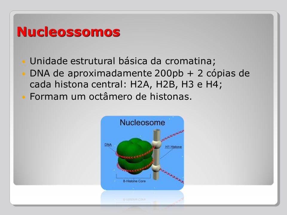 Nucleossomos Unidade estrutural básica da cromatina;