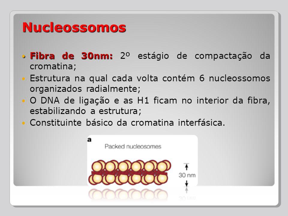 Nucleossomos Fibra de 30nm: 2º estágio de compactação da cromatina;