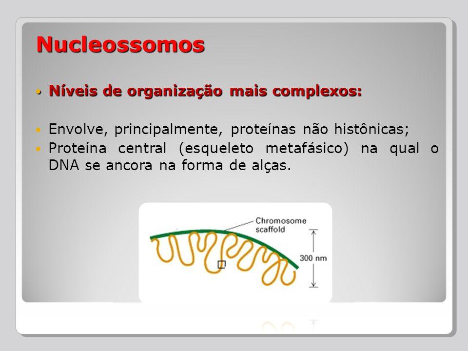 Nucleossomos Níveis de organização mais complexos: