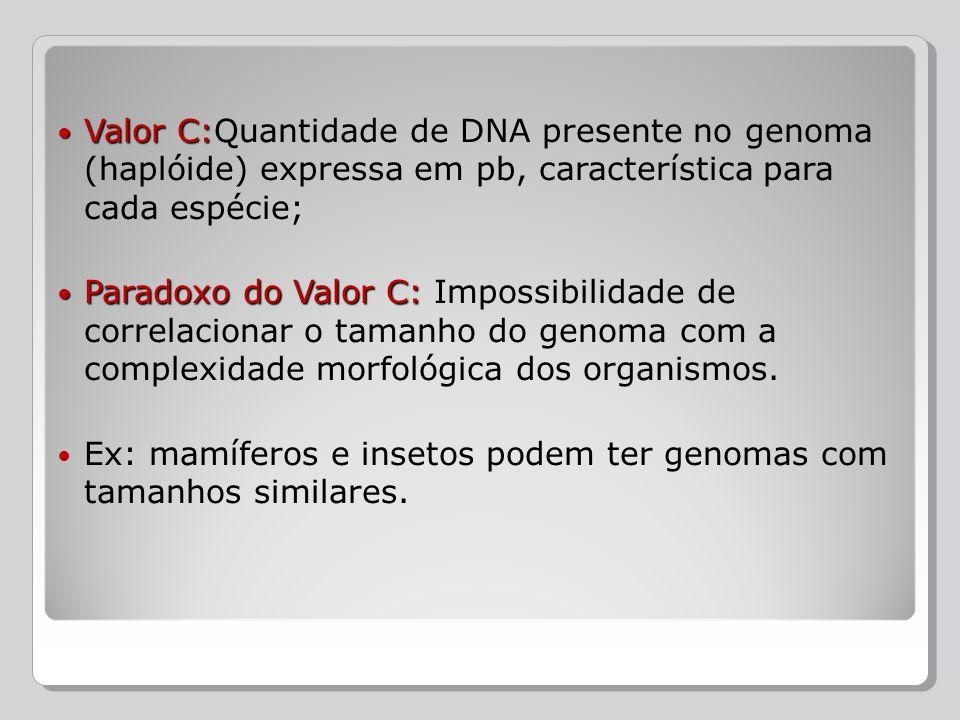 Valor C:Quantidade de DNA presente no genoma (haplóide) expressa em pb, característica para cada espécie;