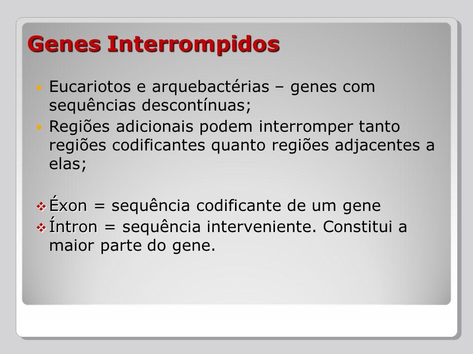 Genes Interrompidos Eucariotos e arquebactérias – genes com sequências descontínuas;