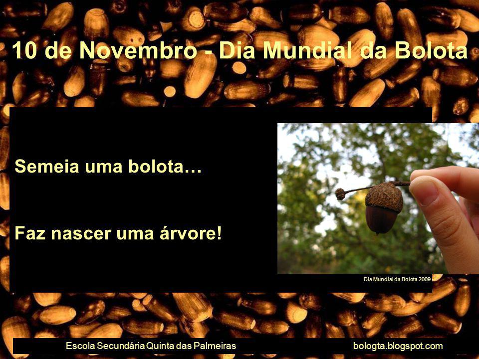 10 de Novembro - Dia Mundial da Bolota