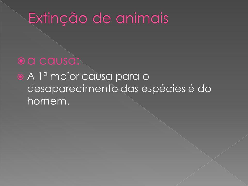 Extinção de animais a causa: