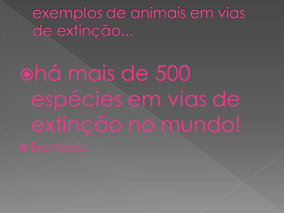 exemplos de animais em vias de extinção...