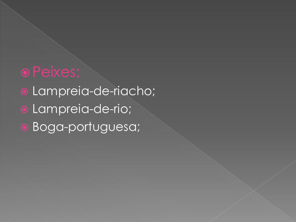 Peixes: Lampreia-de-riacho; Lampreia-de-rio; Boga-portuguesa;