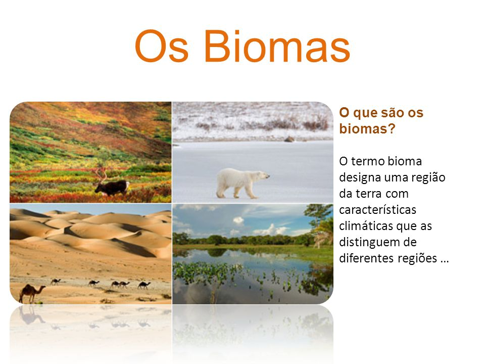 Os Biomas O que são os biomas