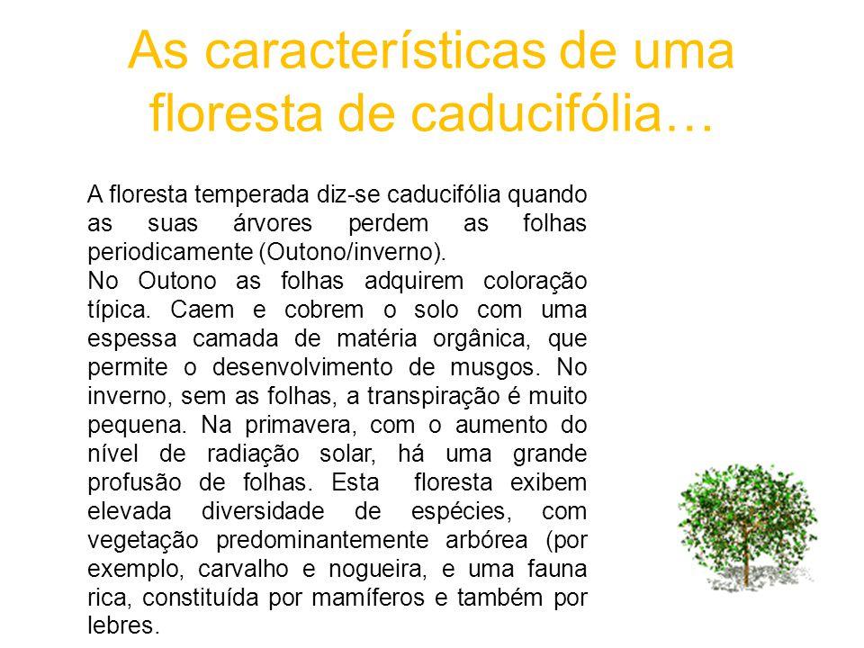As características de uma floresta de caducifólia…