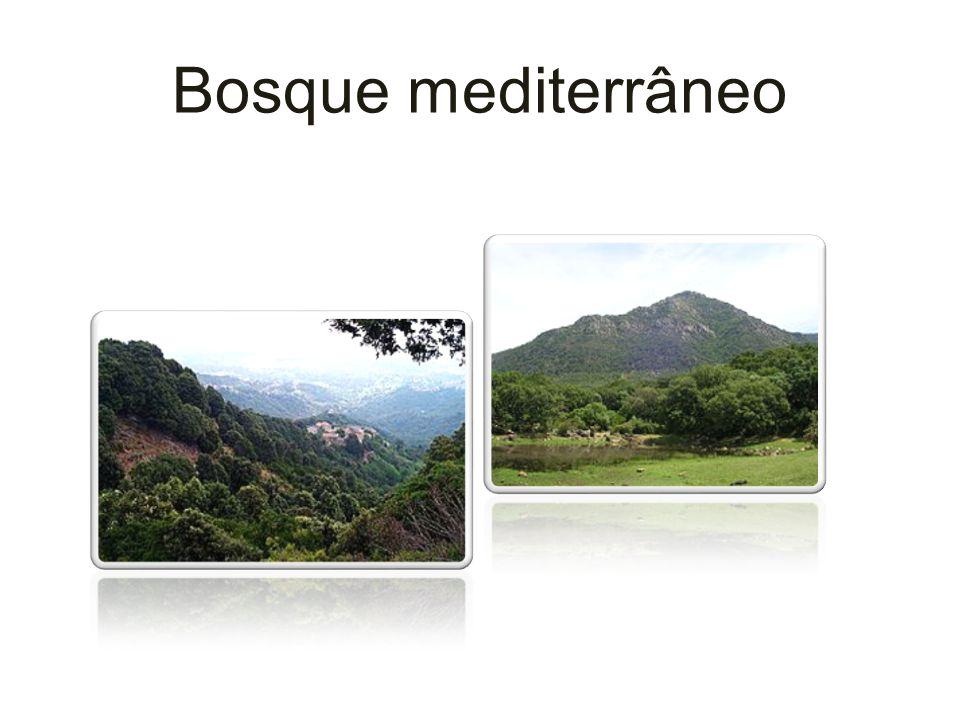 Bosque mediterrâneo
