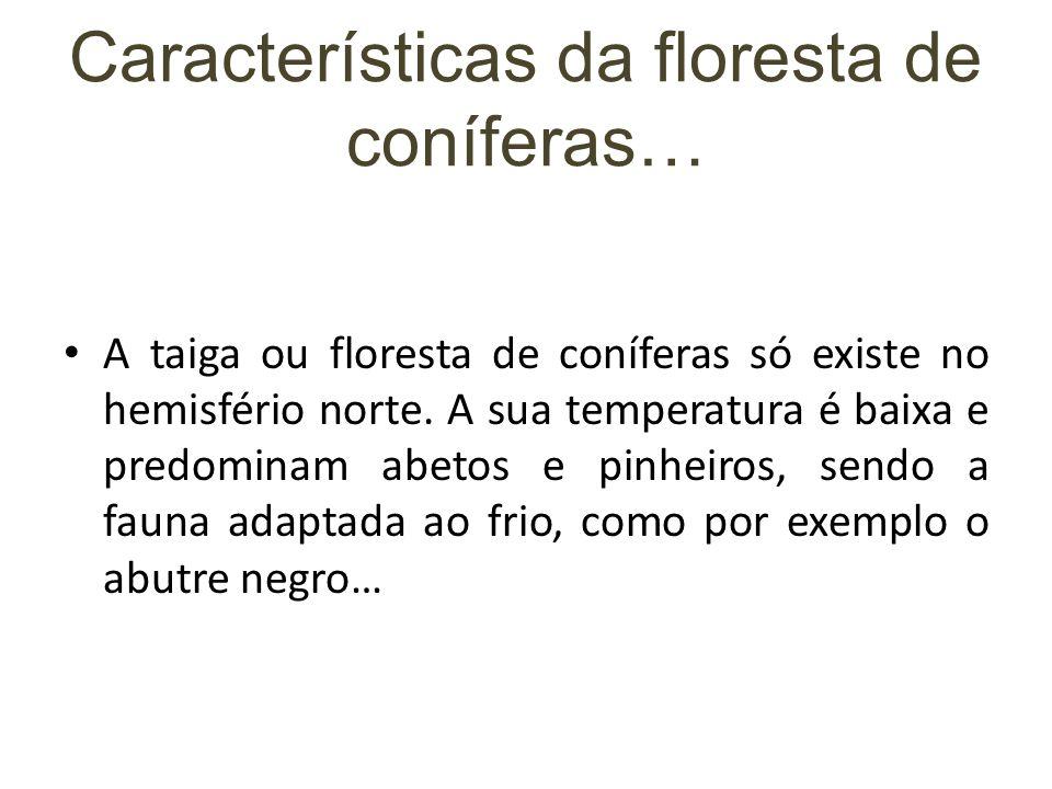 Características da floresta de coníferas…