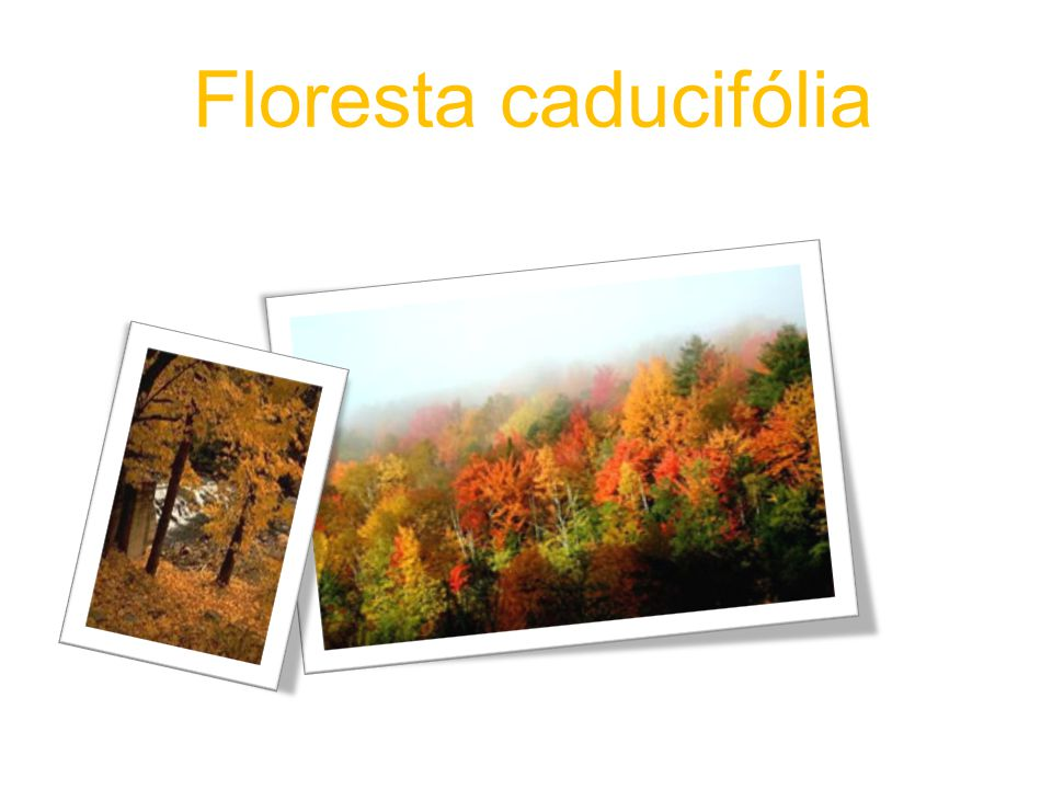 Floresta caducifólia