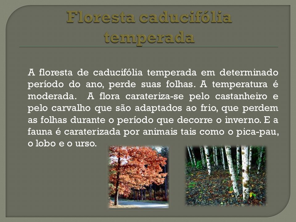 Floresta caducifólia temperada