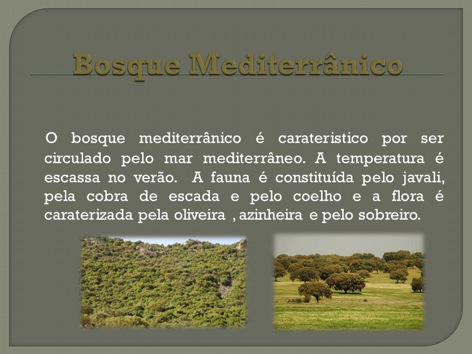 Bosque Mediterrânico