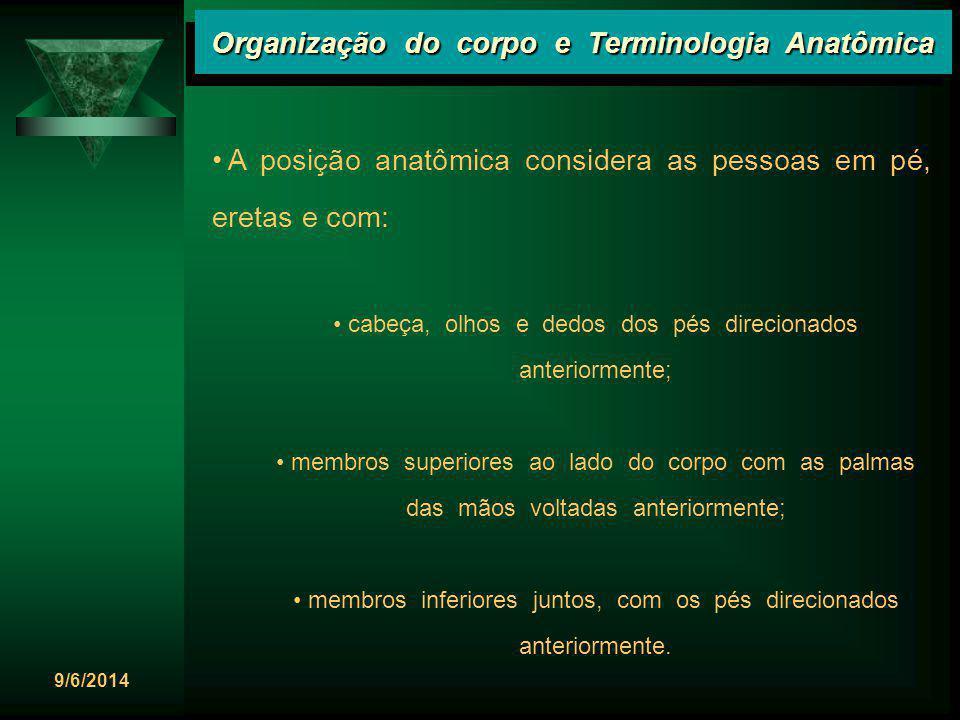 Organização do corpo e Terminologia Anatômica