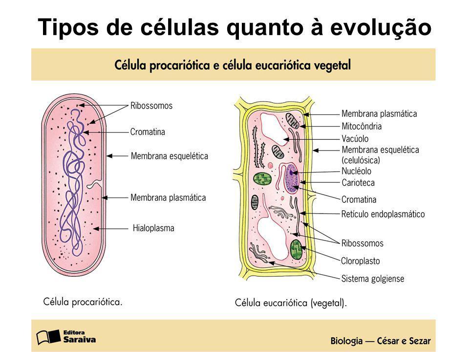Tipos de células quanto à evolução