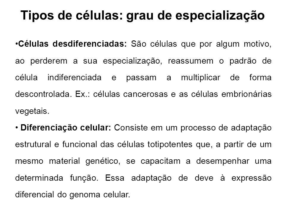 Tipos de células: grau de especialização