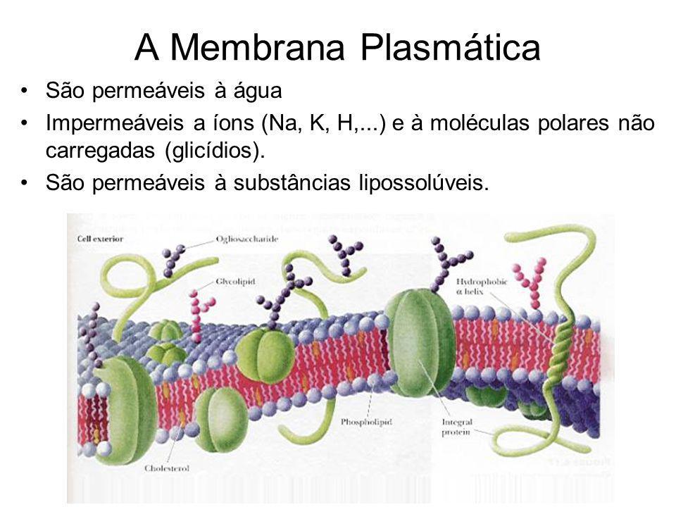 A Membrana Plasmática São permeáveis à água