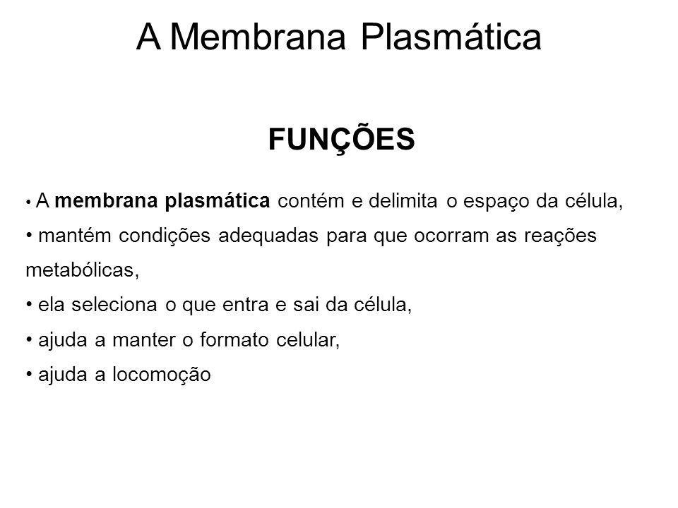 A Membrana Plasmática FUNÇÕES