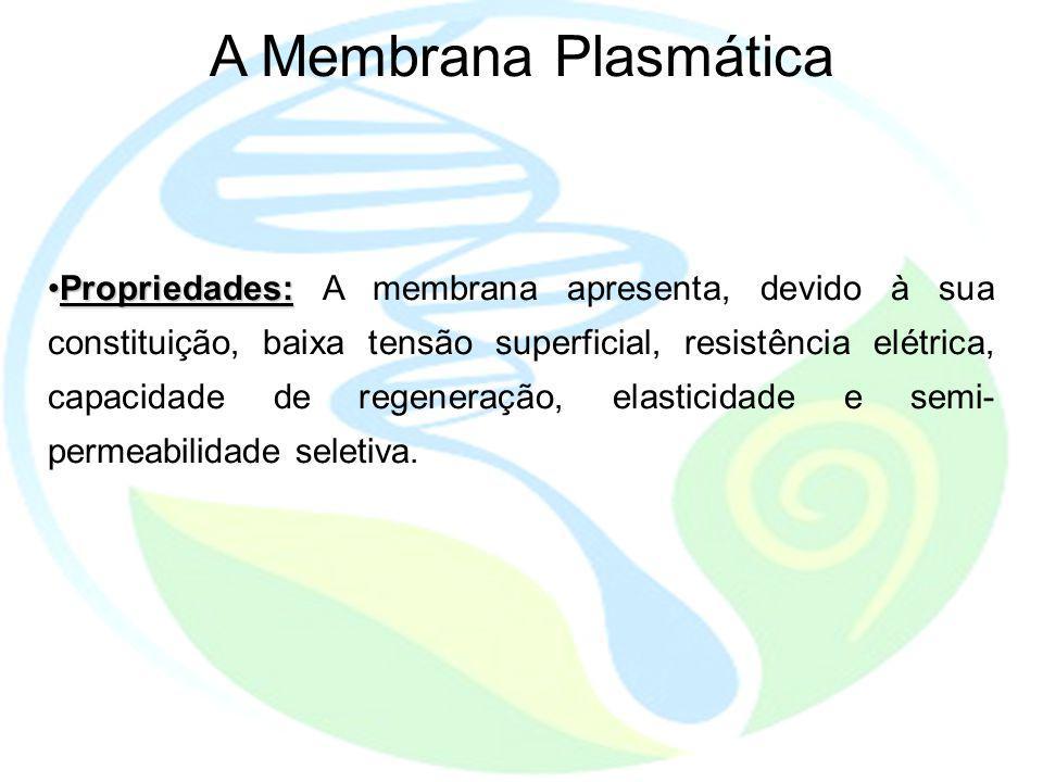 A Membrana Plasmática