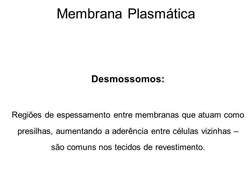 Membrana Plasmática Desmossomos: