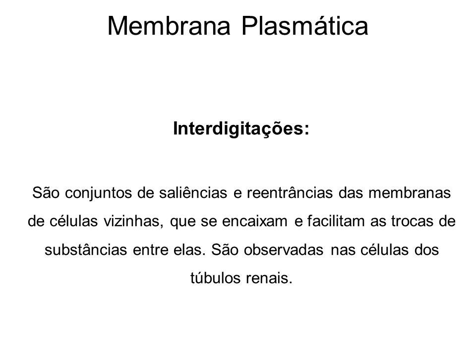 Membrana Plasmática Interdigitações: